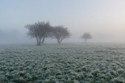 Frosty Bure Park