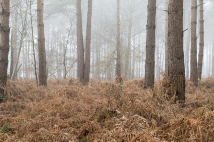 Horsford Woods, Norfolk