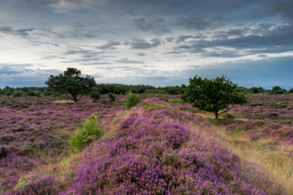 Dunwich Heath Trenches
