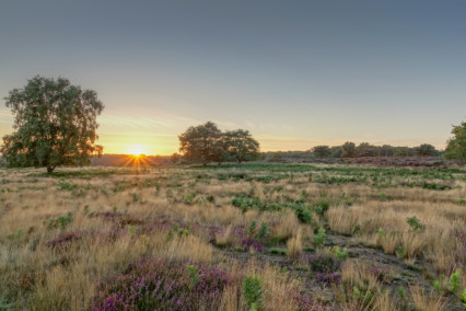 Westleton Heath at Sunset