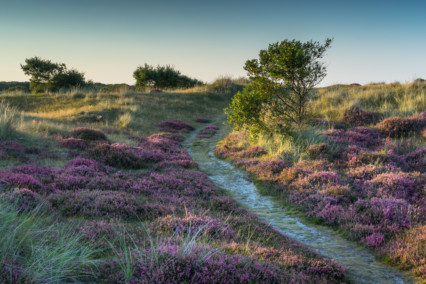 Winterton-on-Sea Heather