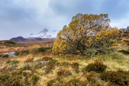 Sgurr nan Gillean and autumn tree